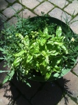 patio herb pot